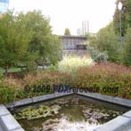 Downtown Portland Riverfront Pond