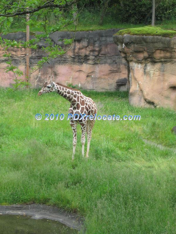 Oregon Zoo: Oregon Zoo Pictures Located In Northwest Portland, Oregon