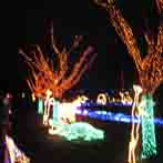 Zoo Lights